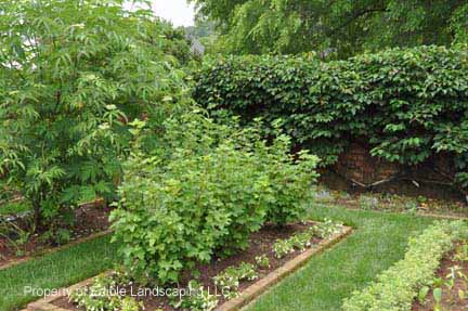 Currant Edible Landscaping