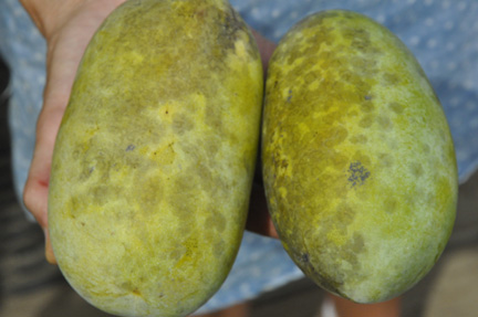 Pawpaw Select 1 lb and .85