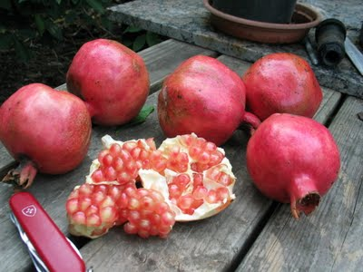Pomegranate Eve