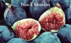 Fig Black Mission