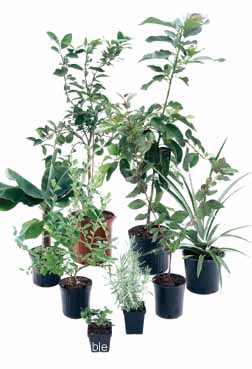 Buy plants from our garden center