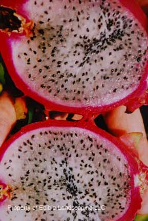 Dragon Fruit halved