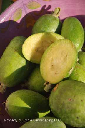Feijoa fruit in bowl