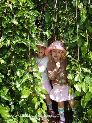 Mulberry Weeping Twins at play