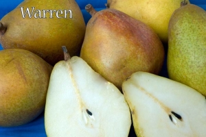 Pear Warren